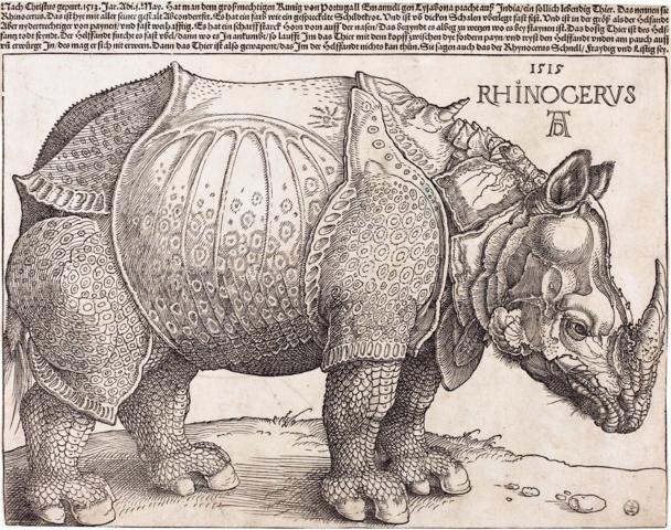 Dürer's Rhinoceros (Wikipedia, public domain)